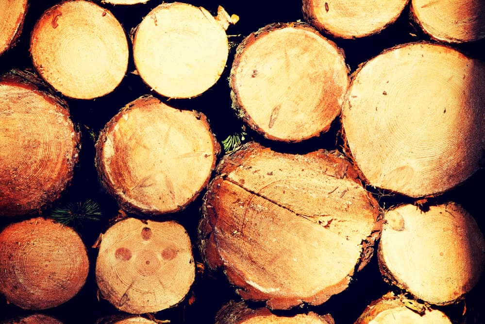 Pine Is a Softwood, But Is It Strong